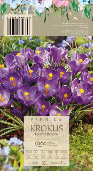 CROCUS FLOWER RECORD 10 szt. DCO (KROKUS)