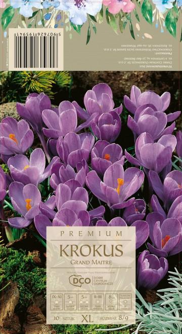 CROCUS GRAND MAITRE 10 szt. DCO (KROKUS)