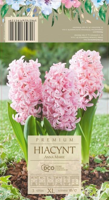 HIACINTHUS ANNA MARIE 3 szt. DCO (HIACYNT)