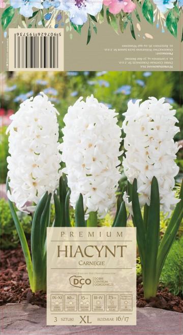 HIACINTHUS CARNEGIE 3 szt. DCO (HIACYNT)