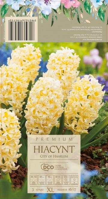 HIACINTHUS CITY OF HAARLEM 3 szt. DCO (HIACYNT)