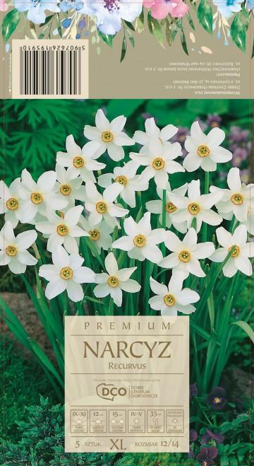 NARCISSUS RECURVUS 5 szt. DCO (NARCYZ)