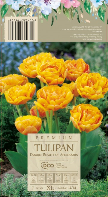 TULIPA DOUBLE  BEAUTY OF APELDOORN 7 szt. DCO (TULIPAN)