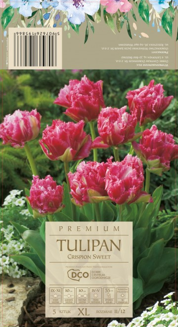 TULIPA CRISPION SWEET 5 szt. DCO (TULIPAN)