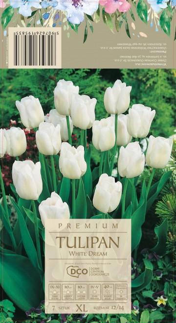 TULIPA WHITE DREAM 7 szt. DCO (TULIPAN)