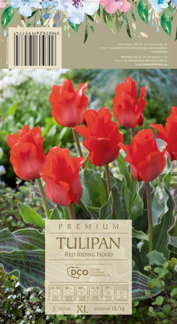 TULIPA RED RIDING HOOD 5 szt. DCO (TULIPAN)