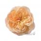 Rosa Incredible 'Mystic Jordin Roca' (Róża jadalna) - C2